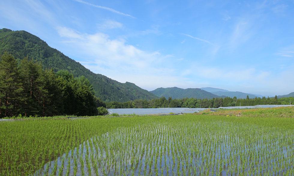 高山の田園風景