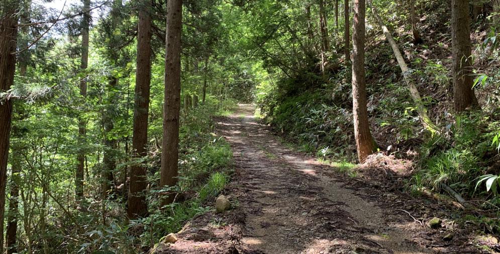 苅安林道の道
