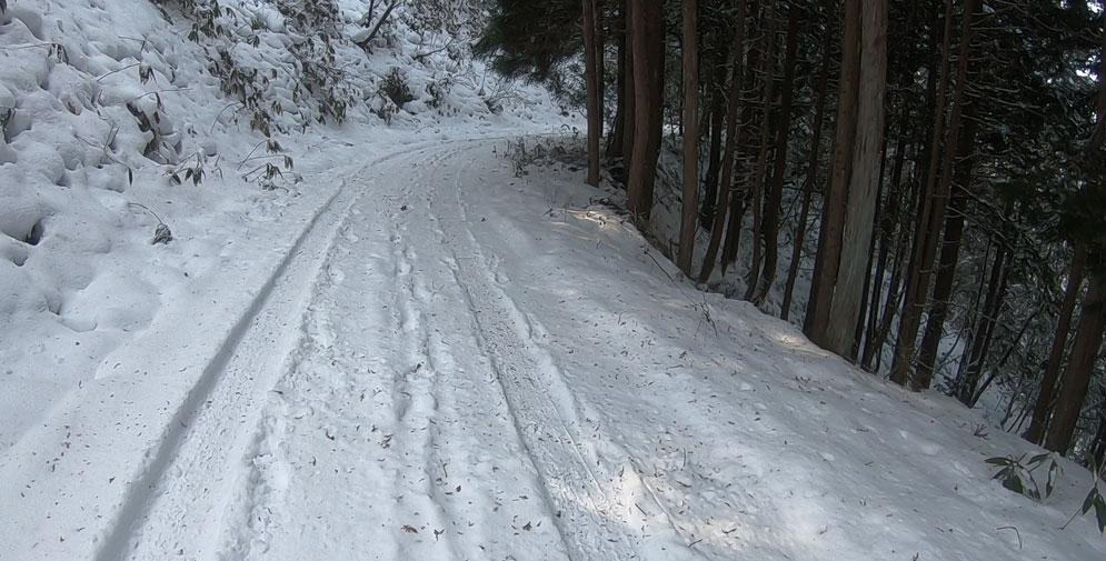 帰りの林道