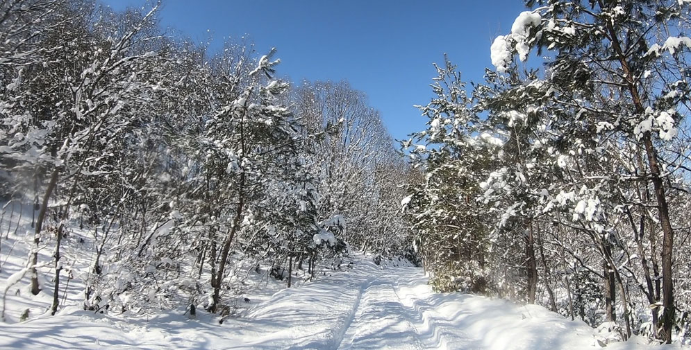 晴天の雪道