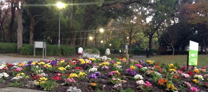 写真:早朝の名城公園