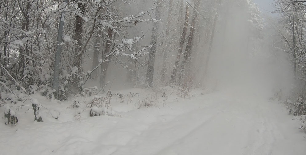 木からの落雪