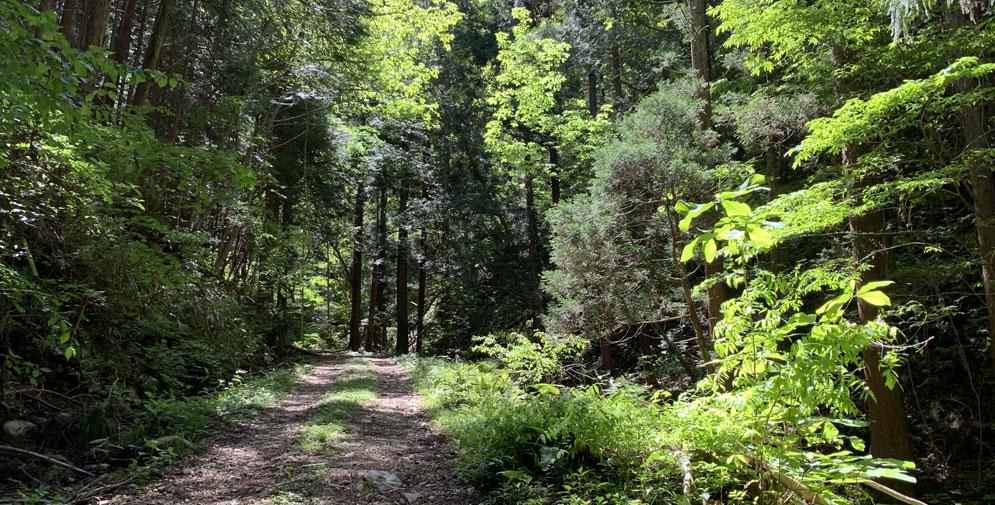 前半の登山道